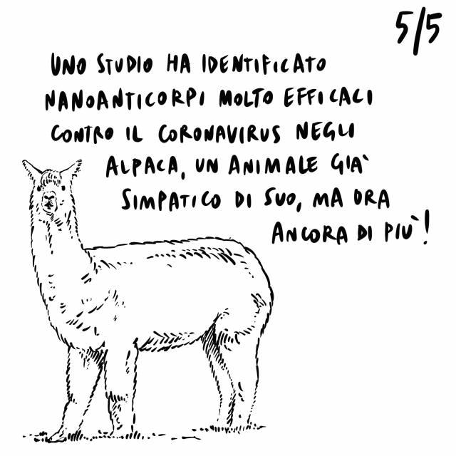 5.09.2020 Berlusconi ricoverato in ospedale, New York in crisi a causa del virus, nanoanticorpi per il virus negli alpaca.